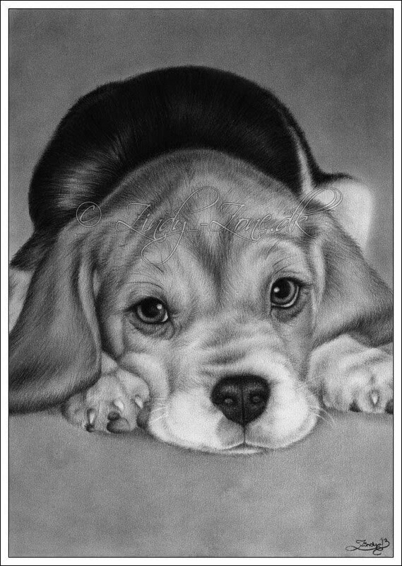 05-Beagle-Zindy-Nielsen-Fantasy-Animals-Meet-Realistic-Ones-www-designstack-co