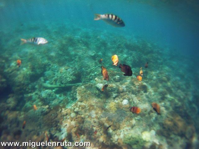 Snorkel-Gamat-Beach