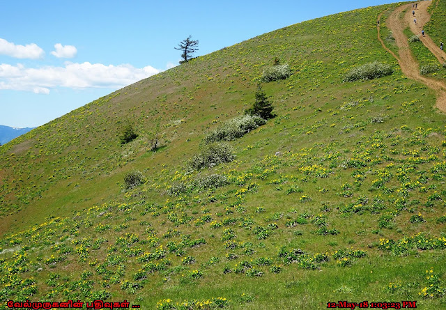 Bald Butte Trail Wildflower Hike
