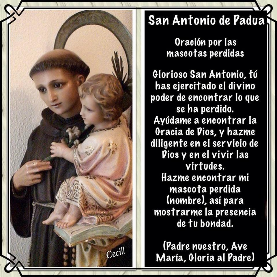 Santoral Catolico San Antonio De Padua