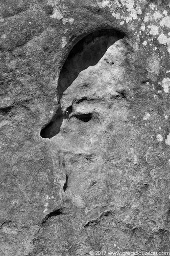 Crane d'œuf, Fontainebleau