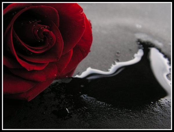 Linhas incertas da d zy rosa despeda ada - Emo rose pictures ...