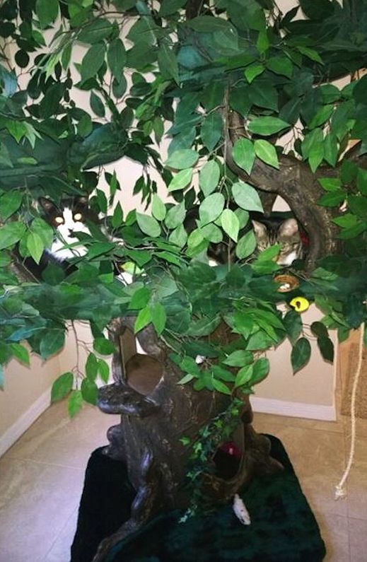 Sturdy Cat Trees