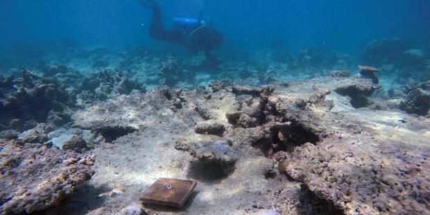 Australia teme un nuevo blanqueo de corales en la Gran Barrera de Arrecifes