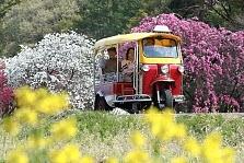 オカーゴ(トゥクトゥク)でお花見