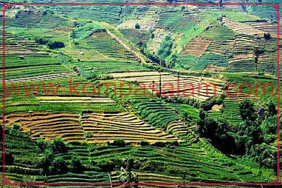 Rolling hills of plantations, Dieng Plateau, Java, Indonesia.