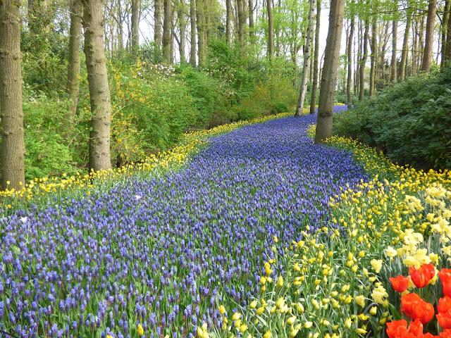 Visit Keukenhof Tulip Gardens Holland Muscari River