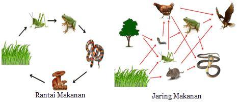 Bentuk Interaksi Antar Komponen Biotik