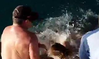 Τάισε καρχαρία με yuμνά χέρια και συνέβη αυτό που ακριβώς φαντάζεστε! BINTEO