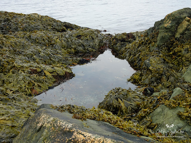 seaweed photos