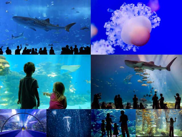 تحميل 8 صورة لحوض السمك بدقة عالية