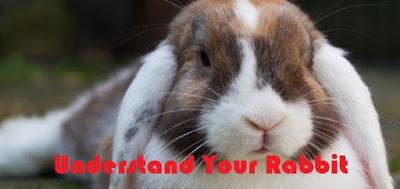 Understand Your Pet Rabbit