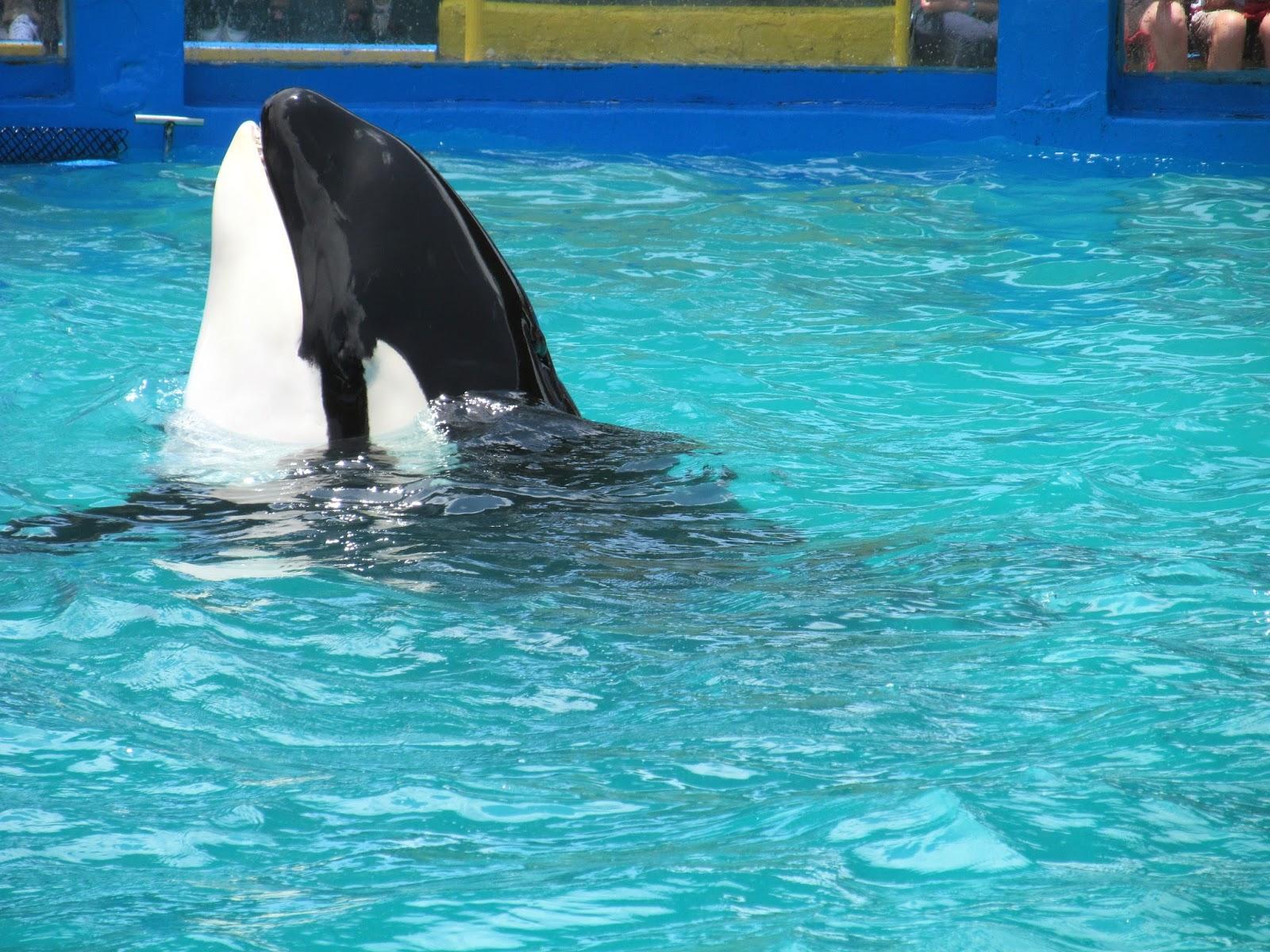 Killer Whale Show Miami Seaquarium, FL - ouroutdoortravels.blogspot.com