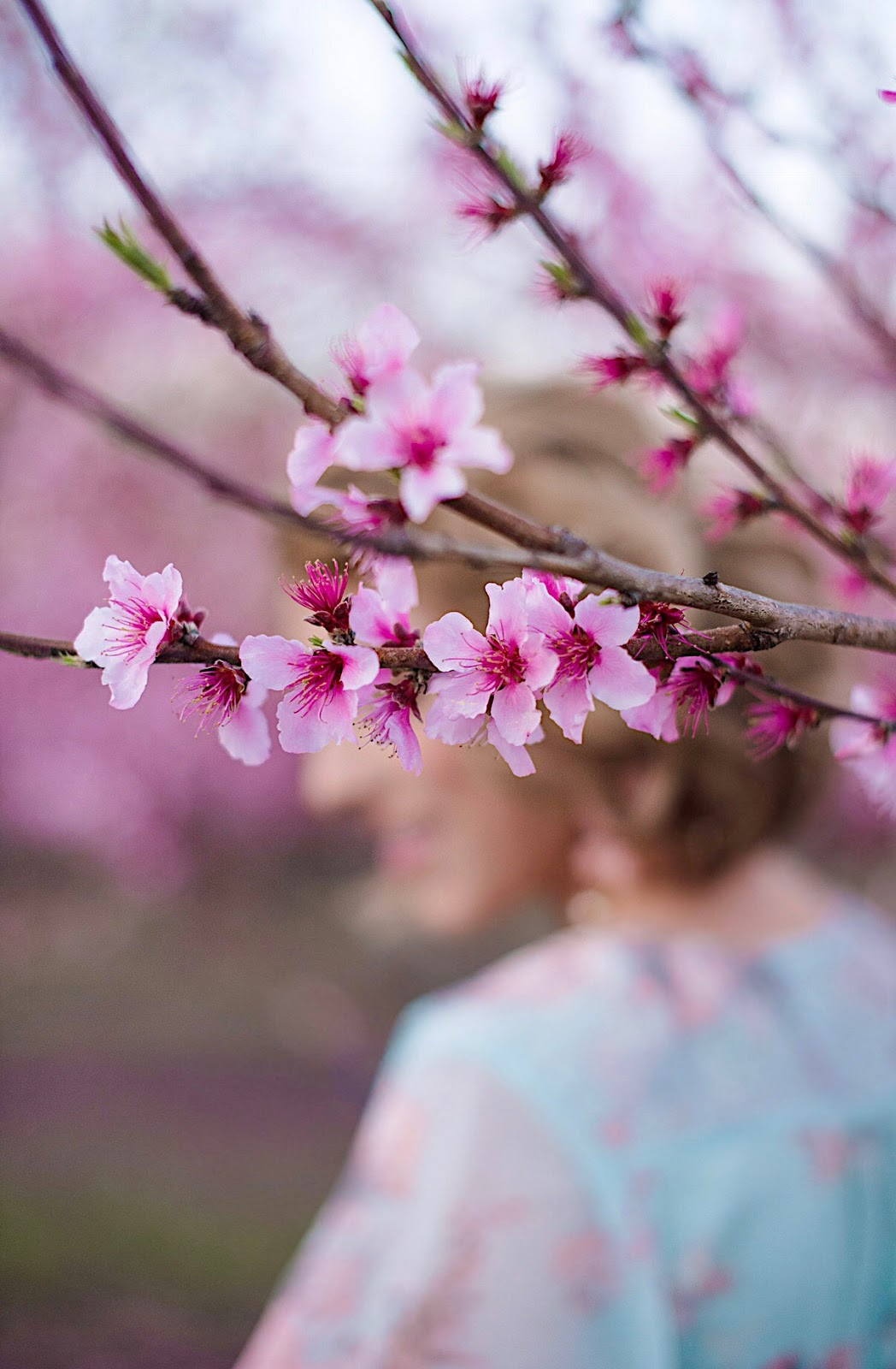 Peach Blossoms - Something Delightful Blog