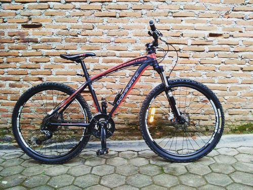 sepeda gunung dominate