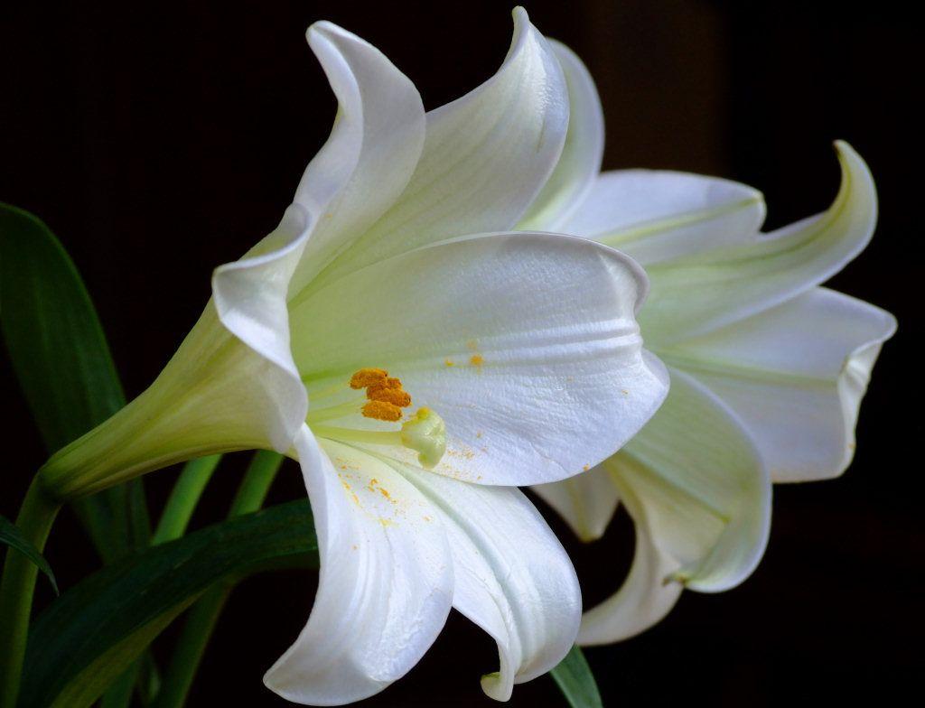 Litlee blog types of romantic flowers izmirmasajfo Choice Image