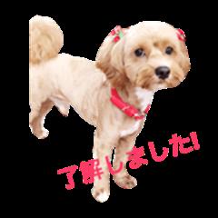 Cute Dog part2