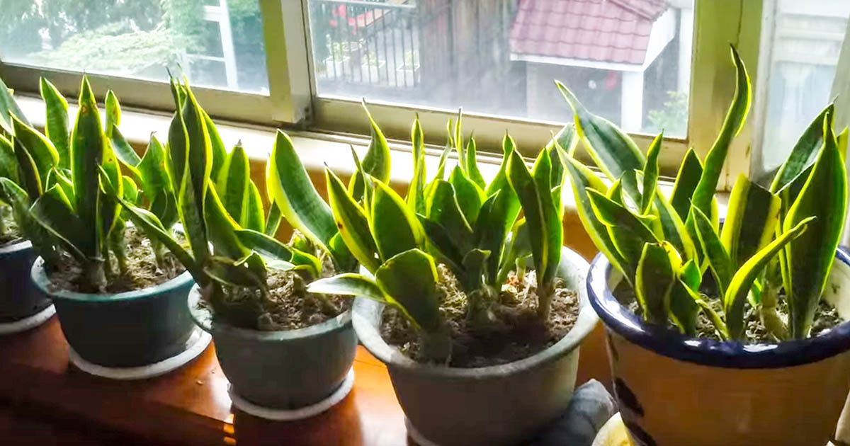 10 Air-Cleaning Houseplants