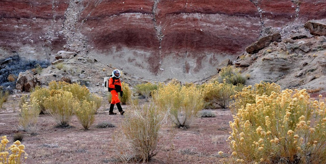 MDRS Expedition 143 Commander Paul Knightly walking through stands of Ericameria nauseosa and Epehdra viridis while wearing a simulated spacesuit. Credit: Paul C. Sokoloff