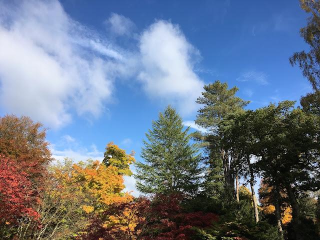 arboretum-trees