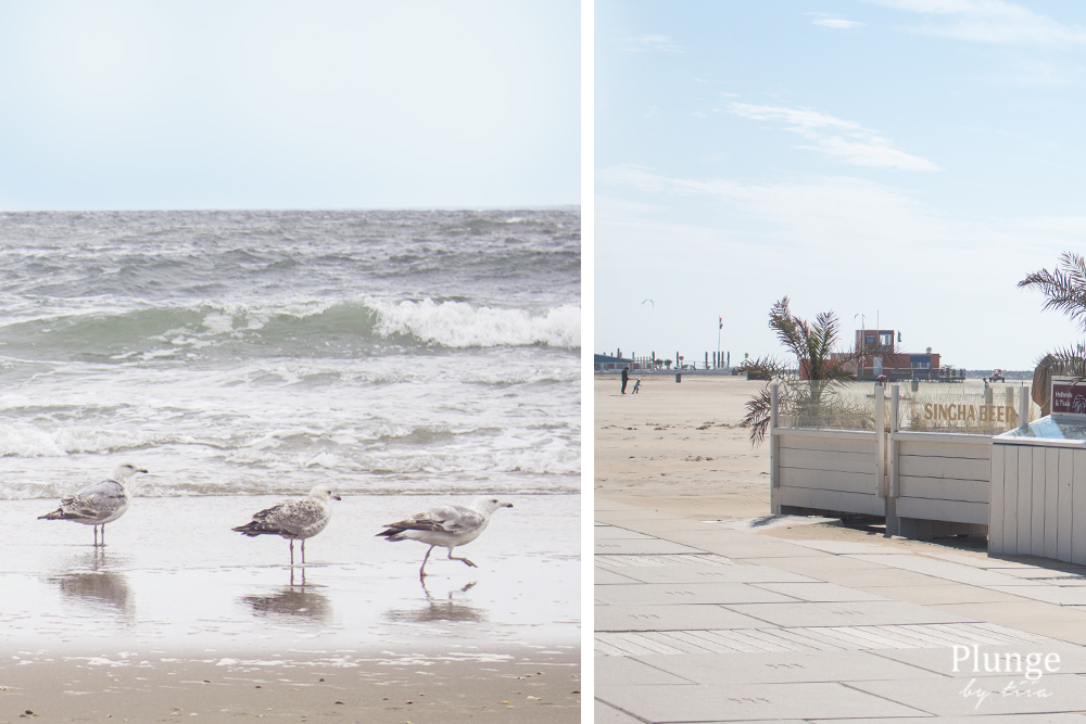 Seagulls at Scheveningen beach