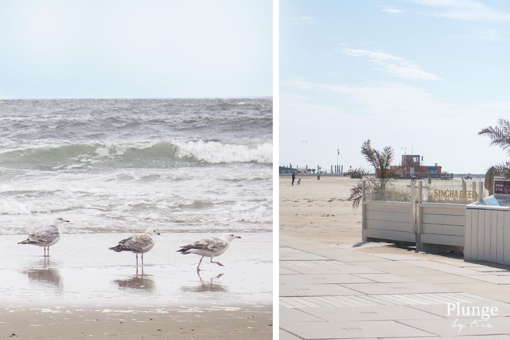 Seagulls at Scheveningen beach