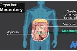 Info Kesehatan Terbaru : Organ Baru Ditemukan dalam Tubuh Manusia oleh Peneliti Irlandia