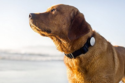 photo of a dog wearing the dog whistle monitor device