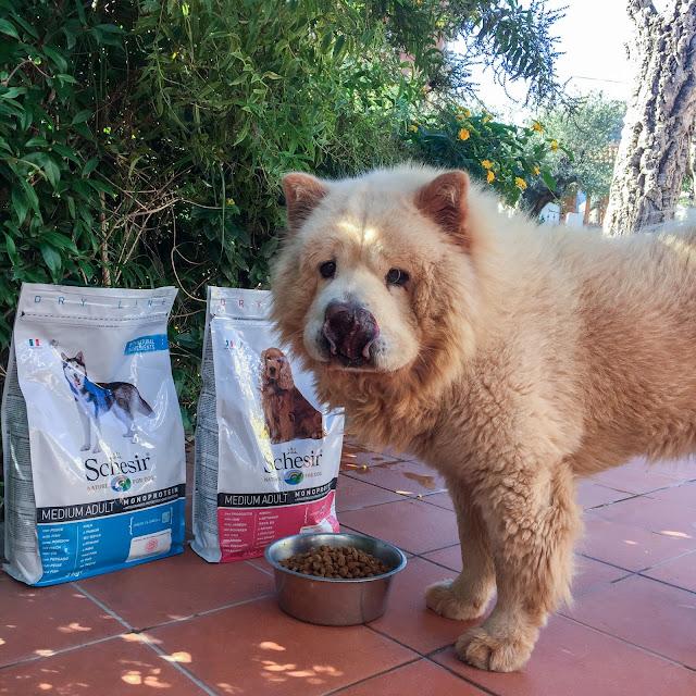 schesir alimentazione per animali