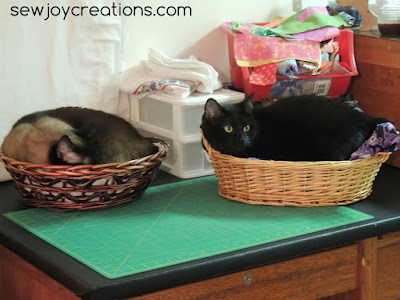 cats in baskets