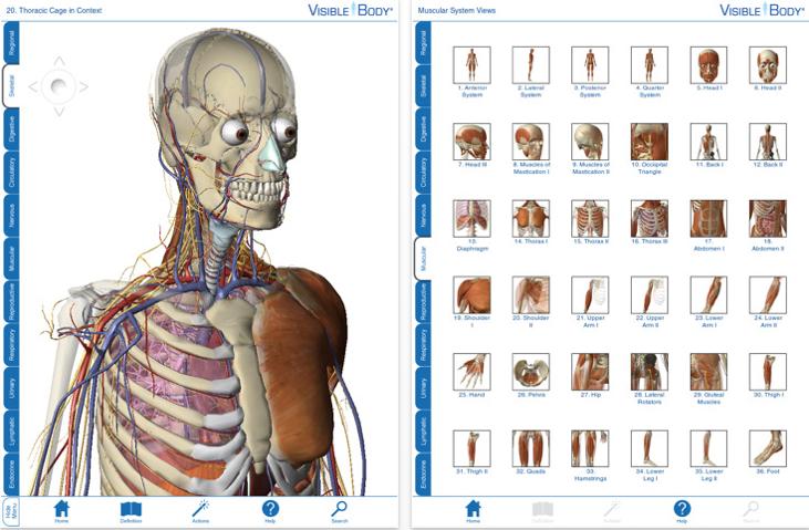 超酷的3D人體透視圖 (Medical App: Visible Body 3D Human Anatomy Altas)... - NEJS