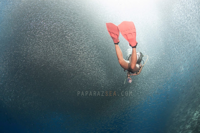 Scuba Diving, Underwater Photography, Dive Philippines, Dive Moalboal, Scuba Diving Moalboal