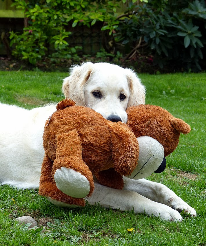 Love me, love my teddy!