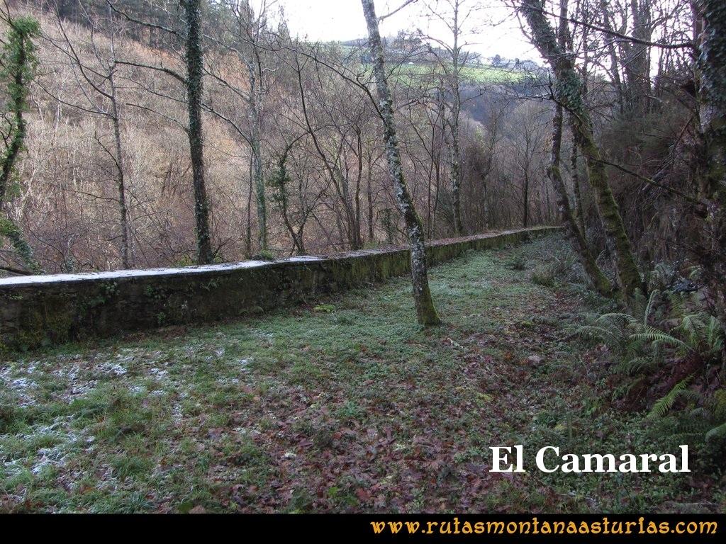 Senda de Bustavil, Tineo, PR AS-288: El Camaral