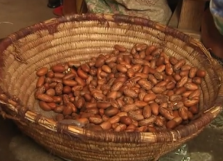 Bitter Kola is not to be confused with the kola nut.