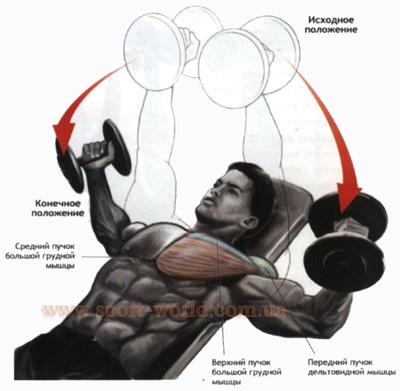 Накачать грудь в домашних условиях Как накачать мышцы груди