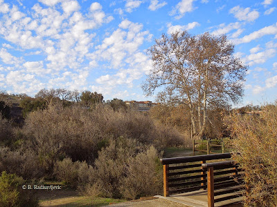 Part of Salinas River Trail in Paso Robles, Larry Moore Park, © B. Radisavljevic