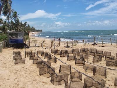 tamar praia do forte bahia