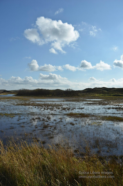 Landscape in Dunes of Texel National Park.