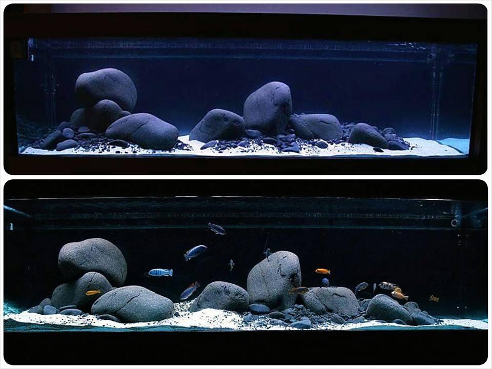 Đá cuội trong một bể thủy sinh nuôi cá ali