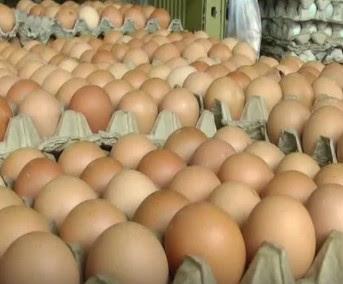 Info Terbaru Harga Telur Hari Ini