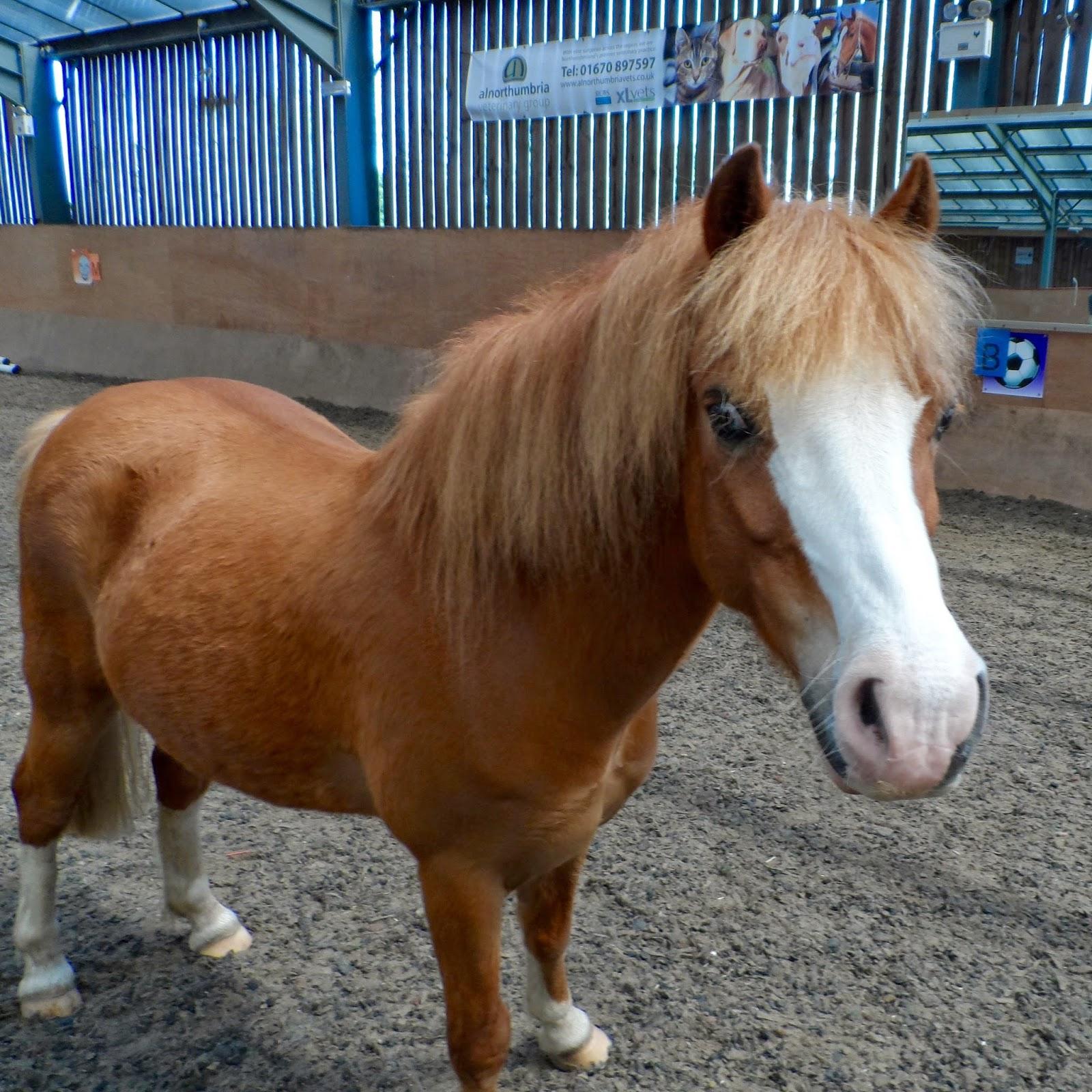 RDA Pony Tales: February 2015