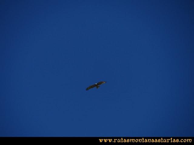 Ruta a la Torre del Friero: Pájaro en Picos de Europa