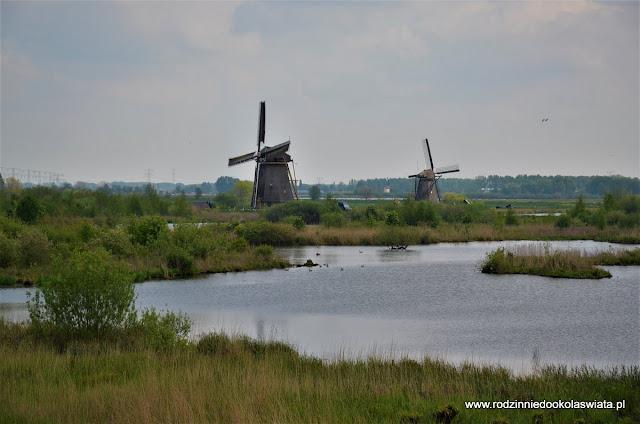 Holandia z dziećmi- śladami holenderskich symboli