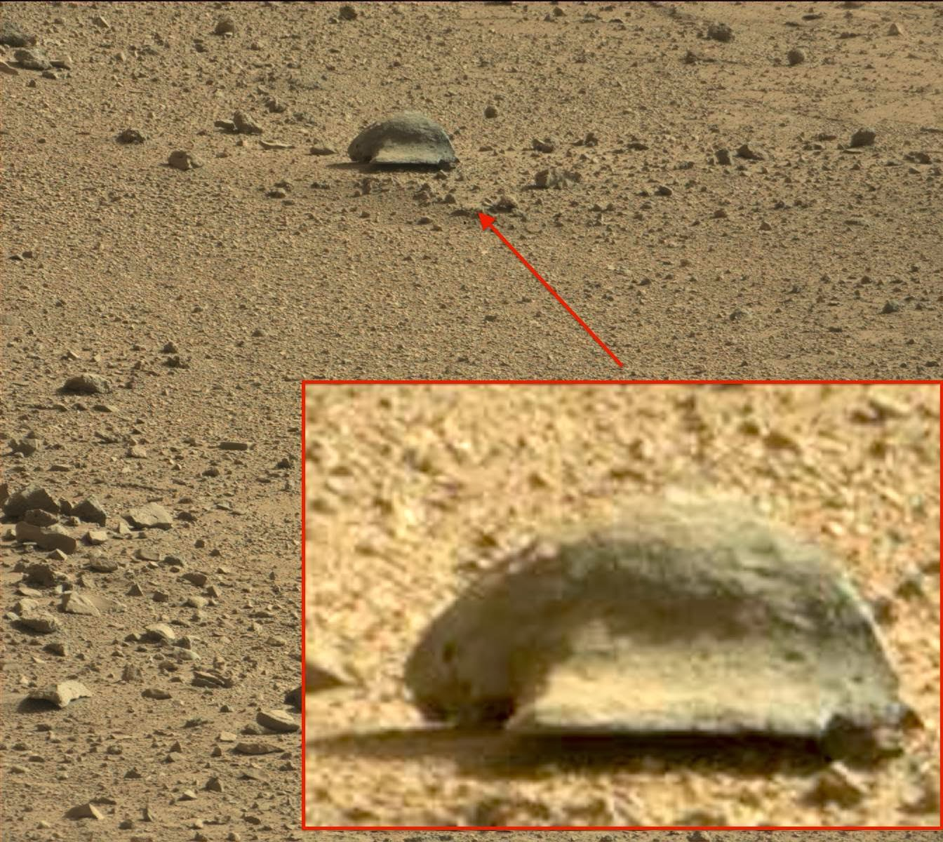 UFO SIGHTINGS DAILY: Tortoise-Like Creature Found By Mars ...