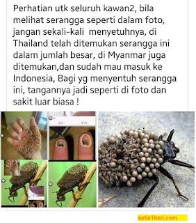 serangga trypophobia