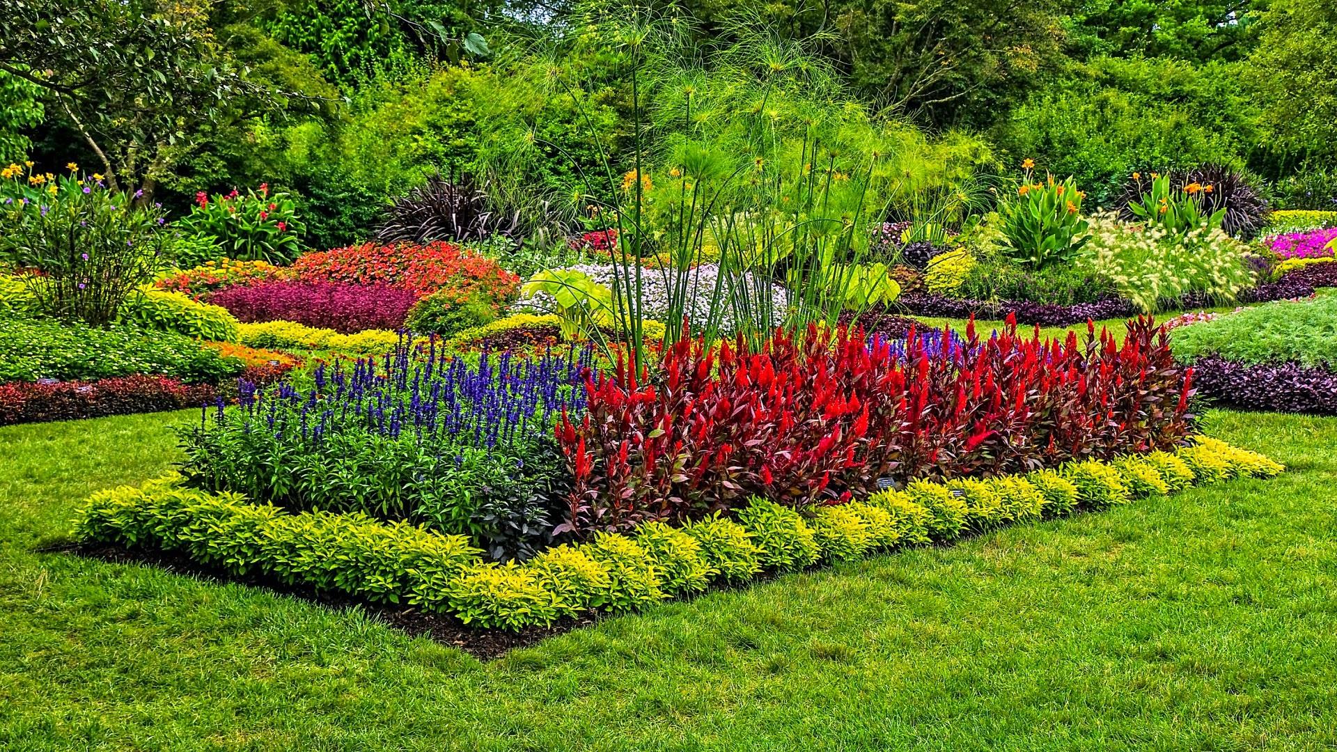 Im genes de jardines muy coloridos fotos e im genes en for Tipos de pinos para jardin fotos