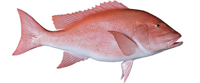 Red Snapper Sushi Suppliers