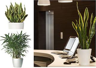 Feng Shui Arredamento Ufficio : Feng shui crogiolo d oro le piante per purificare l aria in casa