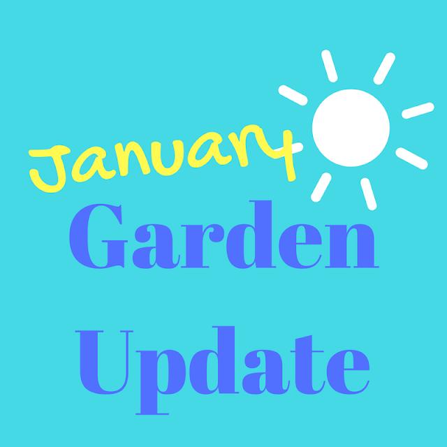 Skip The Bag January Garden Update